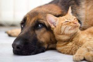 Pet Sitters & Dog Walkers