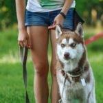 Dog Walker, Dog Waking